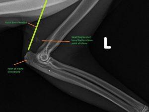 Felix's X-ray